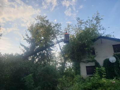 Foto zur Meldung: Bergahorn stürzte auf ein Michelsdorfer Haus