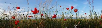 Foto zur Meldung: BRANDENBURG: Richtlinie zur Förderung von Blühstreifen