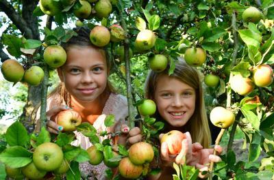 Foto zur Meldung: 25. Niederlausitzer Apfeltag mit Apfelsortenschau, Regionalmarkt & Kulturprogramm