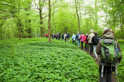 Vorschaubild zur Meldung: Landkreis Dahme-Spreewald lädt zum 4. Internationalen Wandertag am 28.09.19