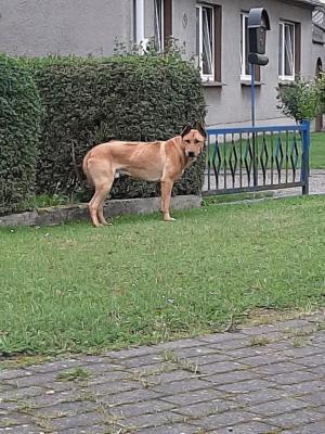 Vorschaubild zur Meldung: Fundhund in Keffenbrink!