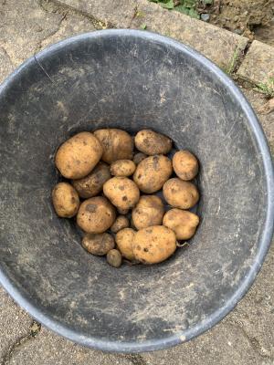 Vorschaubild zur Meldung: Kartoffeln