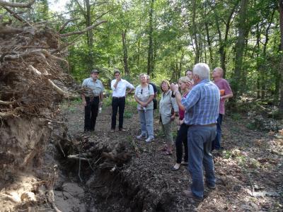 Foto zur Meldung: Gemeindevorstand besichtigt Sturmschäden im Nauheimer Oberwald