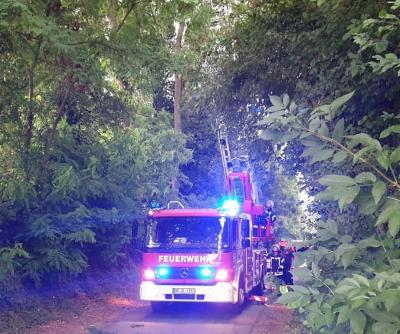 Einsatz Nr. 48 - Tierrettung Papagei auf Baum
