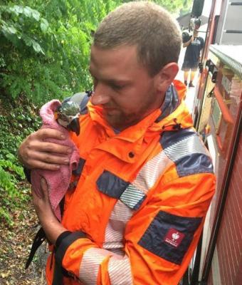 Einsatz Nr. 49 - Tierrettung Papagei auf Baum II