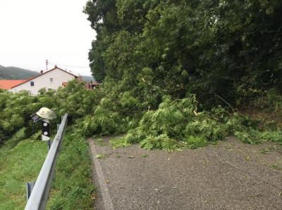 Einsatz Nr. 53 - Sturmschäden, Baum auf Straße