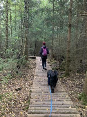 Vorschaubild zur Meldung: Wandertag auf dem Erlebnispfad Binger Wald