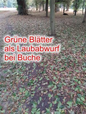 Grüner Laubabfall im Klosterpark