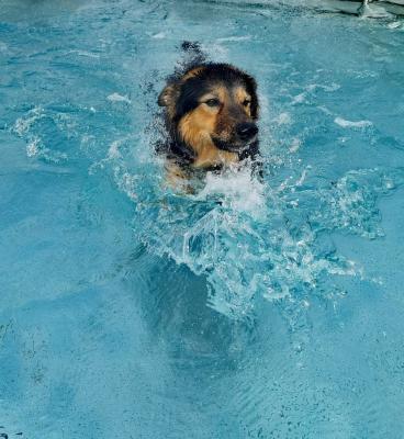 Im Oktober gibt es ein erstes Hundeschwimmen im Freizeitbad Grasleben (Foto: Förderverein Freizeitbad Grasleben)