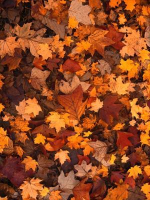 Herbstlaub - Bild von Gerd Altmann auf Pixabay