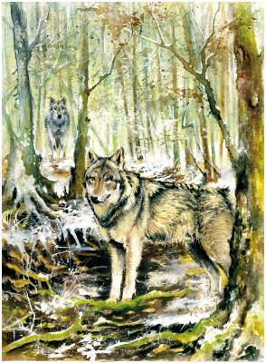 Wolf Ben