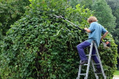 Vorschaubild zur Meldung: Zurückschneiden von Bäumen und Sträuchern
