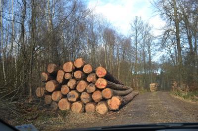 Vorschaubild zur Meldung: Brennholz 2021