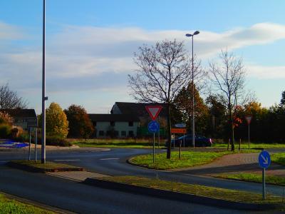 Foto zur Meldung: Erster Laub-Weihnachtsbaum in Nauheim an der Berzallee