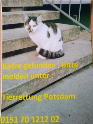 Vorschaubild zur Meldung: Katze gefunden!!!