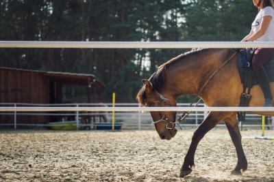 Bild der Meldung: Neuerungen zum Trainingsbetrieb, Veranstaltungen, Seminaren und Abzeichenprüfungen im Pferdesport in MV