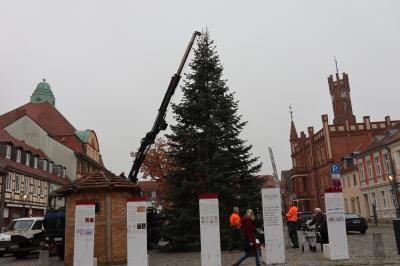 Vorschaubild zur Meldung: Der Weihnachtsbaum steht