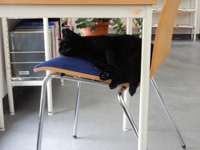 Stadt Perleberg | Katze Findus schlafend in der Stadtbibliothek Perleberg