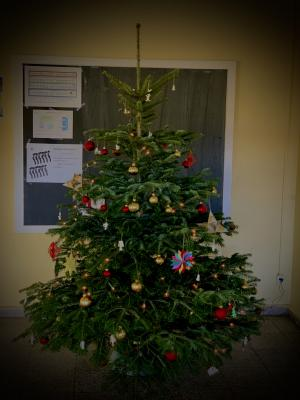 Ein Weihnachtsbaum im Advent