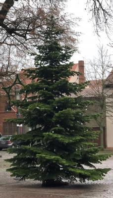 Vorschaubild zur Meldung: Dankeschön an die Spender der Weihnachtsbäume