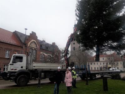 Foto zu Meldung: Aufstellung des Weihnachtsbaumes in Genthin