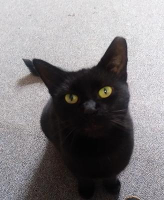 Stadt Perleberg | die Katze Findus ist weider in der Bibliothek