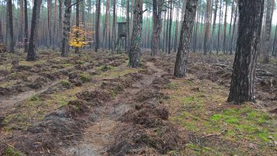 7500 Bäume für Fichtenwalde