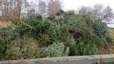 Foto zur Meldung: Einsammeln der Tannenbäume