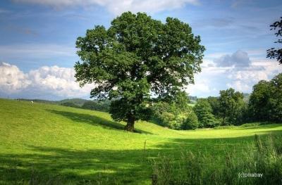 Vorschaubild zur Meldung: Bußgeld wegen Baumschnitt in der Vegetationsperiode vom Amtsgericht Potsdam bestätigt