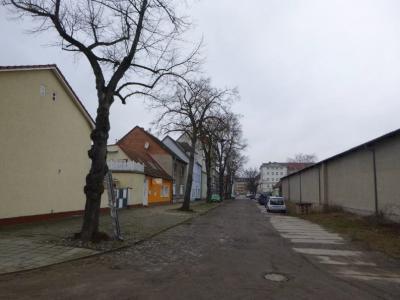 In der Zimmerstraße beginnen noch im Januar Baumfällarbeiten