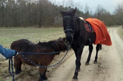 Foto zur Meldung: Pony Flori