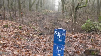 Foto zur Meldung: Baumrodungen zur Trinkwassersicherheit