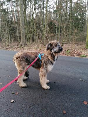Fundhund-Poppendorf