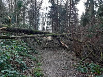 Vorschaubild zur Meldung: Schlosswald Wächtersbach ab sofort wegen Windbruch gesperrt