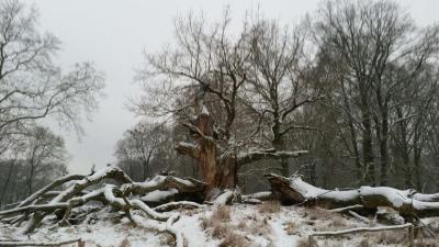 Winter - alles ruht - © G.Rose