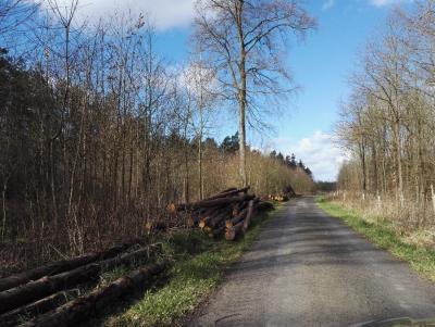 Vorschaubild zur Meldung: Brennholzversteigerung am 16.03.2020 in der Festhalle in Schützingen