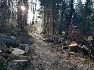 Vorschaubild zur Meldung: Schlosswald Wächtersbach wieder offen - Aufräumarbeiten haben begonnen - Wege sind frei