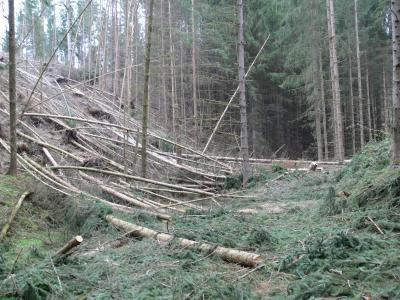 Vorschaubild zur Meldung: Pressemitteilung der Stadt Stadtroda - Gefahr durch Betreten der Wald- und Wanderwege