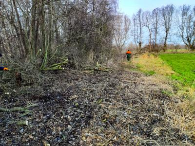 Foto zur Meldung: Grebser schneiden Rundweg um Görnsee frei