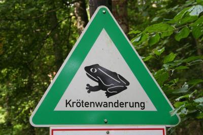 Foto zur Meldung: Straßensperrung wegen Amphibienwanderung