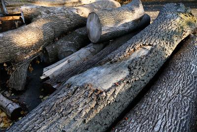 Foto zu Meldung: Informationen zu den Baumfällungen auf dem Waldstück am Schlagweg