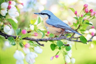 Foto zur Meldung: Frühlingsausstellung in der Gemeindebücherei Oberneisen