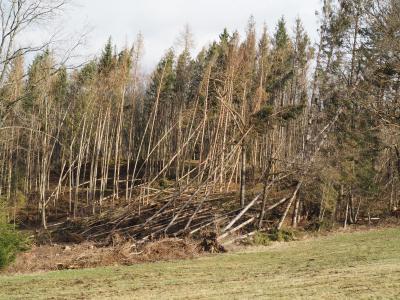 Foto zur Meldung: Landratsamt Waldshut - Medienmitteilung - Gefahren im Wald