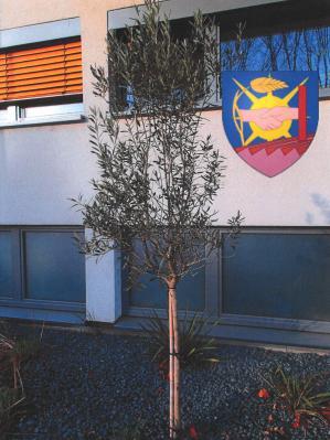 Olivenbäumchen vor dem Nauheimer Rathaus (mit Wappen der französischen Partnergemeinde Charvieu-Chavagneux)