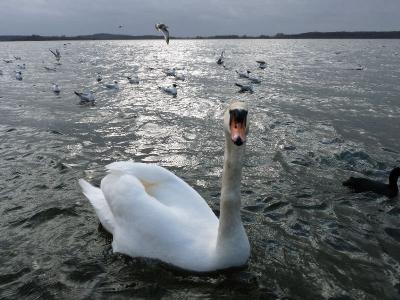 Foto zur Meldung: Maßnahme zur Verhinderung des Wasserabflusses aus dem  Rangsdorfer See wird geprüft