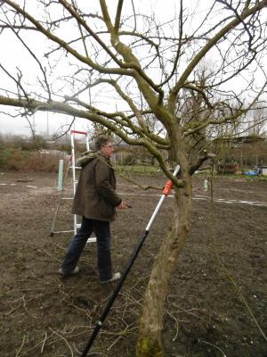 Vorschaubild zur Meldung: Baumschnitt im Kugelfang