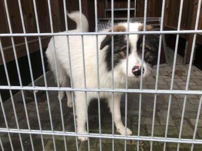 Foto zu Meldung: Fundhund am Gohlitzsee