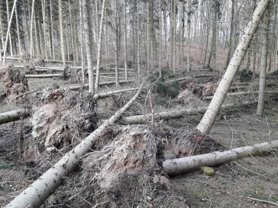 Sturm Hanna hat am 12.03.2020 auch im Neuendorfer Forst gewütet!