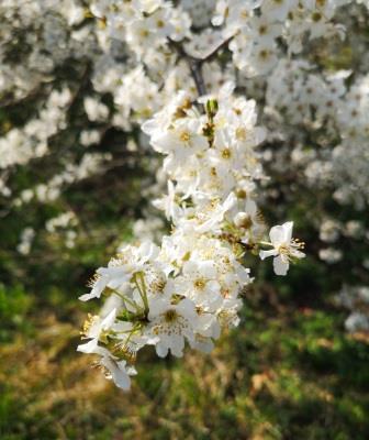 Foto zur Meldung: Frühling