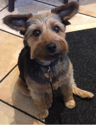 Bild der Meldung: Liebe Grüße an alle von unserem Schulhund Lucky!